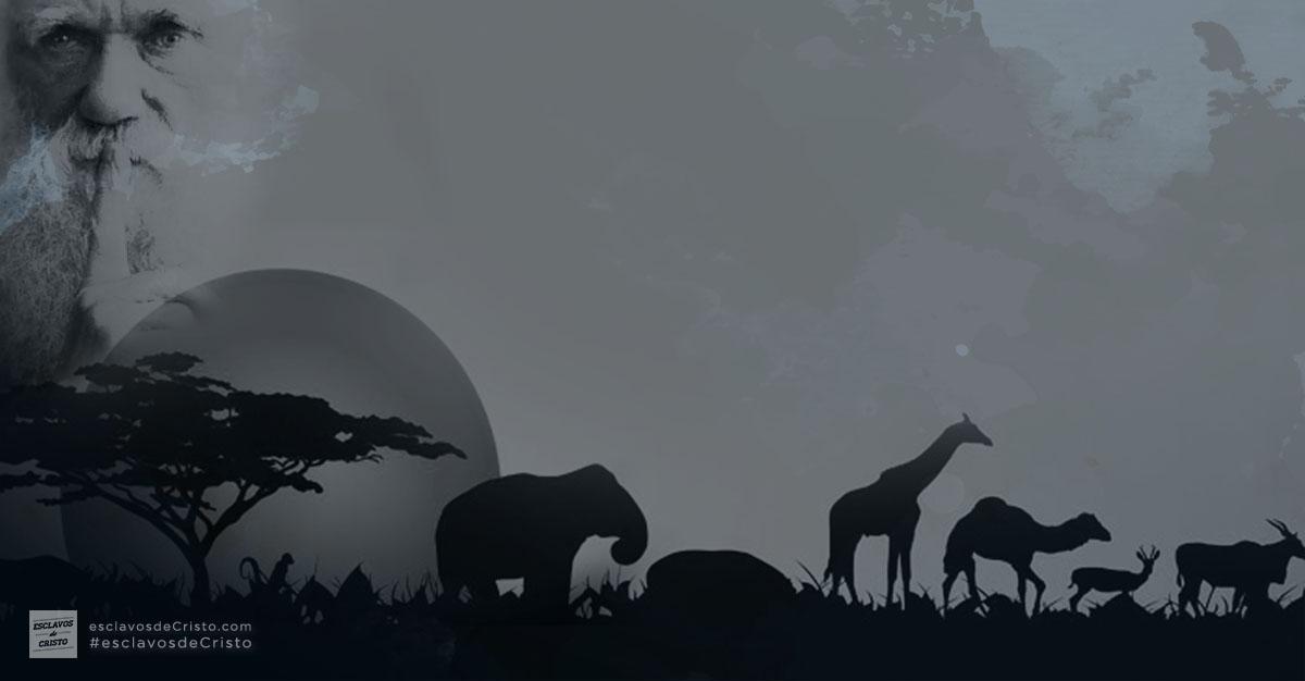Especiación vs. Evolución [parte 2]